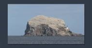 Bass Rock image from RSPB