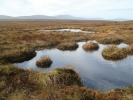 Mountain blanket bog picture from Irish Peatland Conservation Council